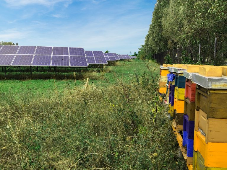Freiflächenanlage mit Bienenstöcke in Wien © Photovoltaic Austria