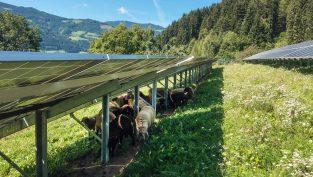Photovoltaik-Freiflächenanlage mit Doppelnutzen © Eco-tec.at