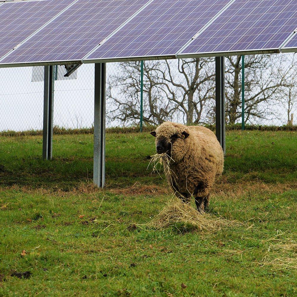 PV-Anlage in der Landwirtschaft (c) Photovoltaic Austria