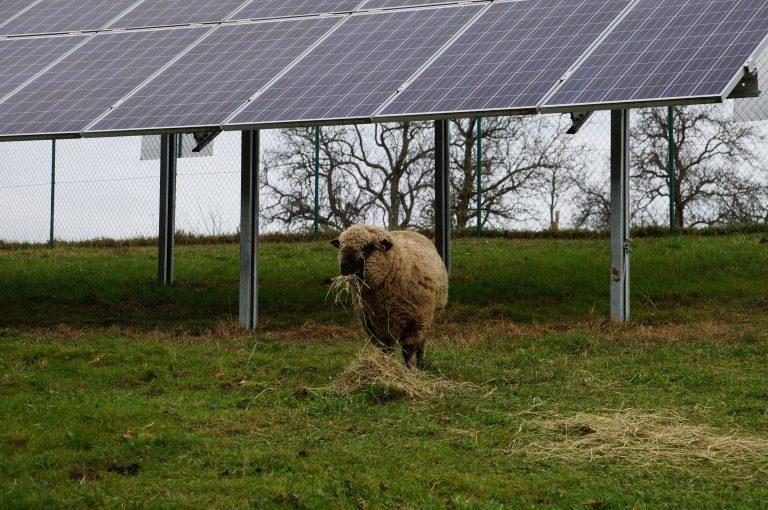 PV-Anlage mit Schafen © Photovoltaic Austria