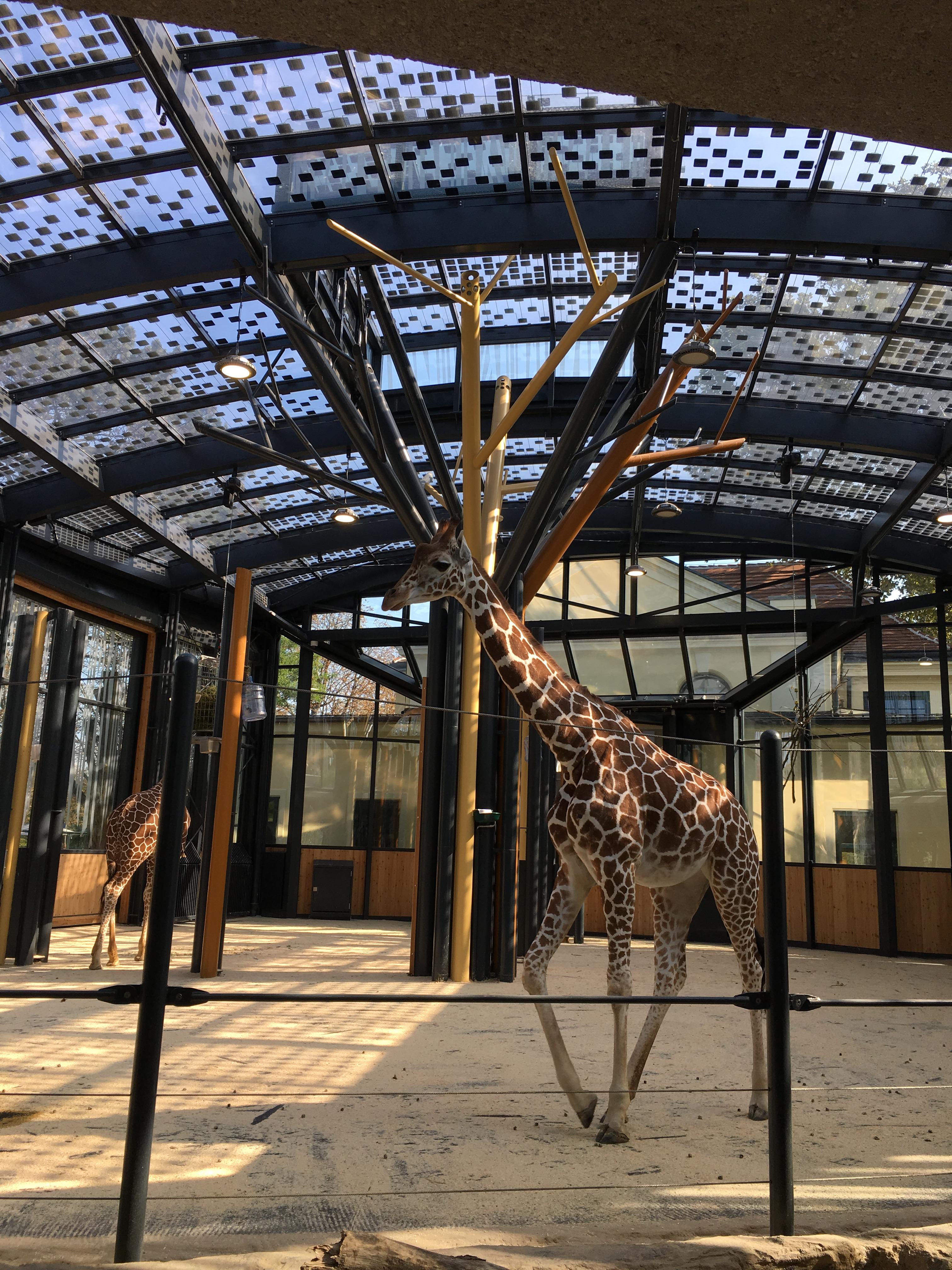 Giraffenhaus Tiergarten Schoenbrunn %C2%A9ertex solar Dieter Moor | Photovoltaik Österreich